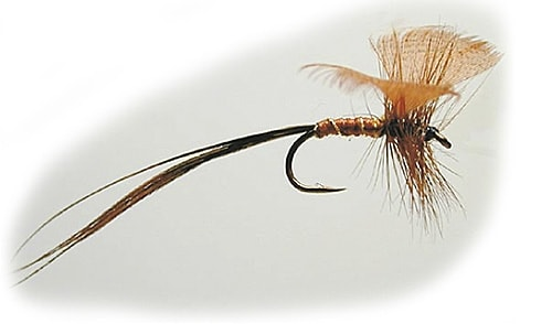 Mayflies 10 Brun winged fan